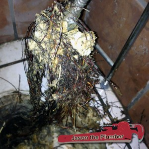 Root Intrusions & Extractions Plumber Maricopa AZ